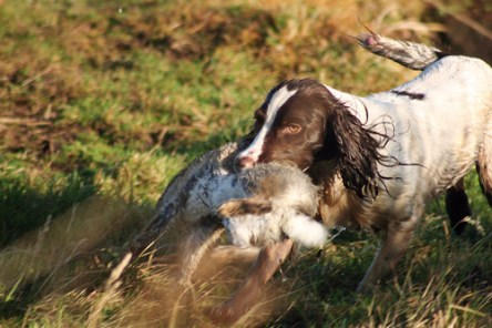 inverness_gun_dog_gallery_16