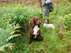 inverness_gun_dog_gallery_3