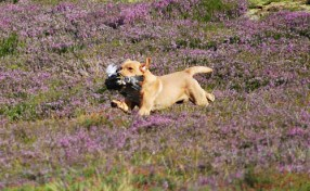 inverness_gun_dog_gallery_9